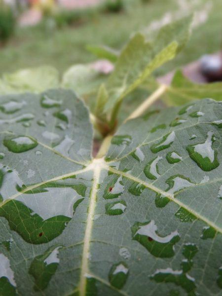 leaf-249396_960_720[1]