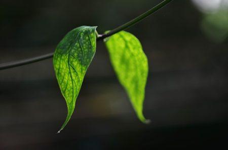 leaf-318667_640