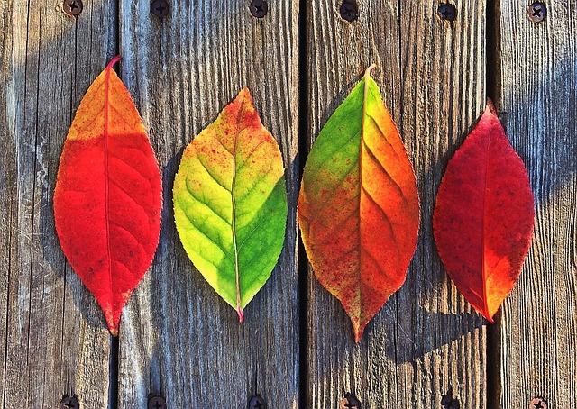 leaves-1051937_640