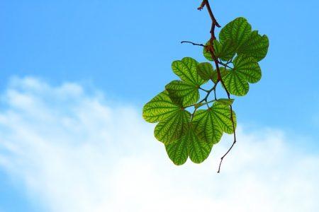 leaves-15757_640
