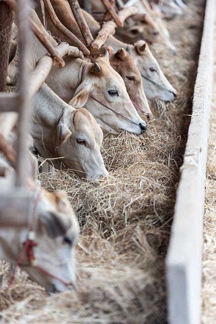 livestock-1822698_640