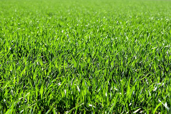 meadow-2184989__480