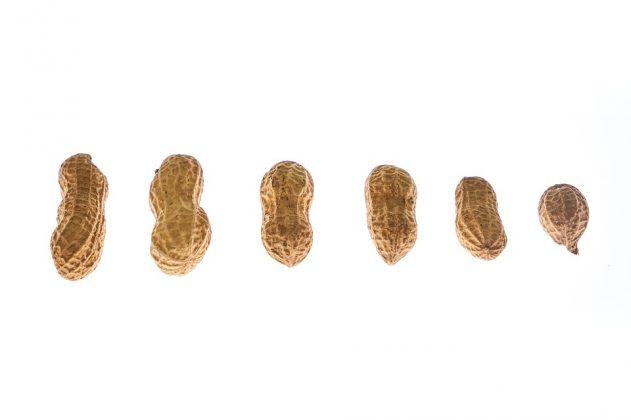 peanut 3709931 960 720