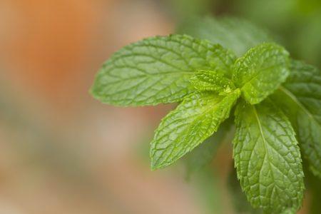 plant-2376664_640