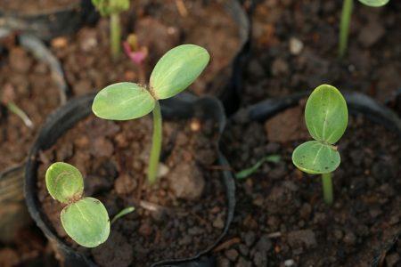 plant-2395165_640