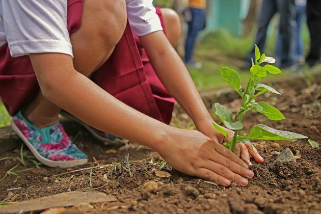 planting 1898946 960 720