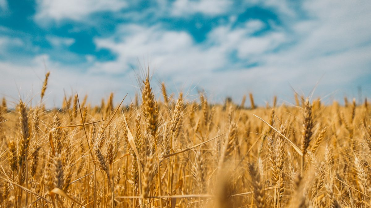 grains with blue sky