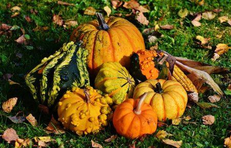 pumpkins-1712841_640