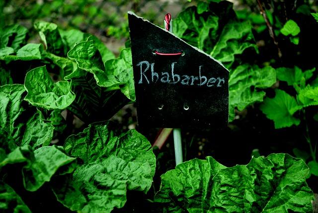 rhubarb-2280641_640