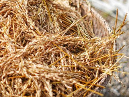 rice-crust-1989596_640