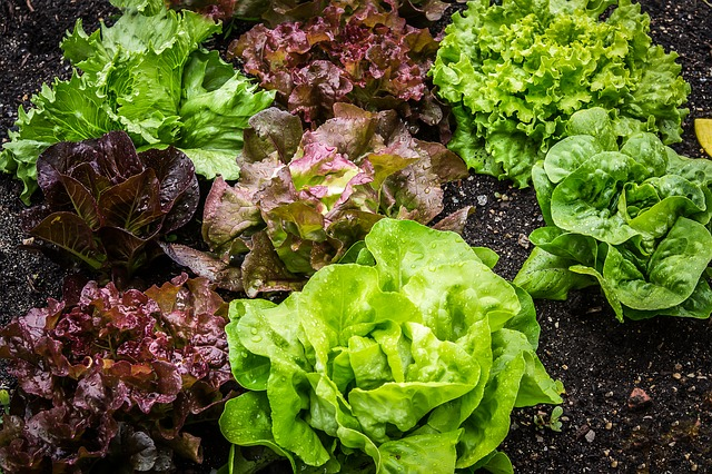salad-2376777_640