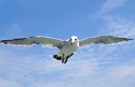 seagull-1684041_640