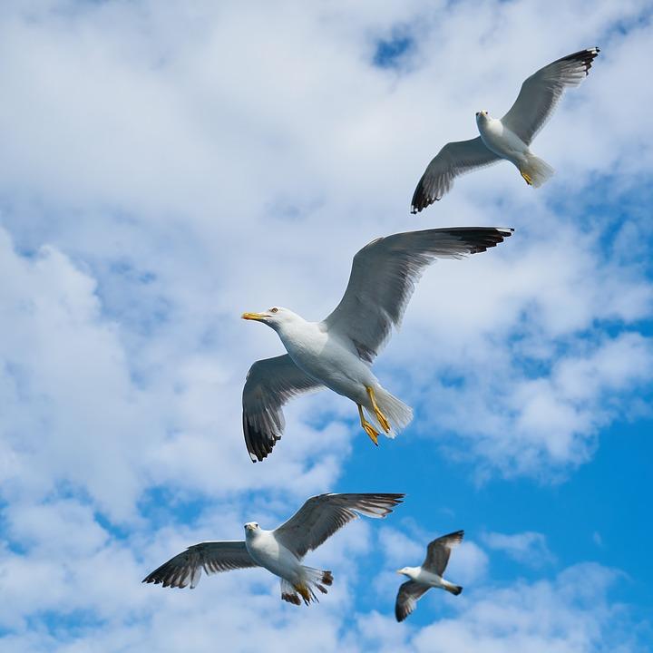 seagull-2303339_960_720