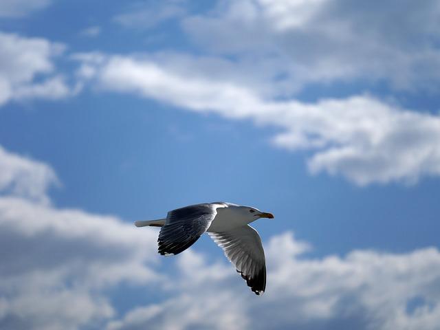 seagull-2435400_640