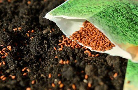 seeds-1302793_640