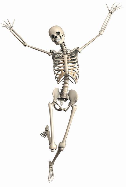 skeleton-2504341_640
