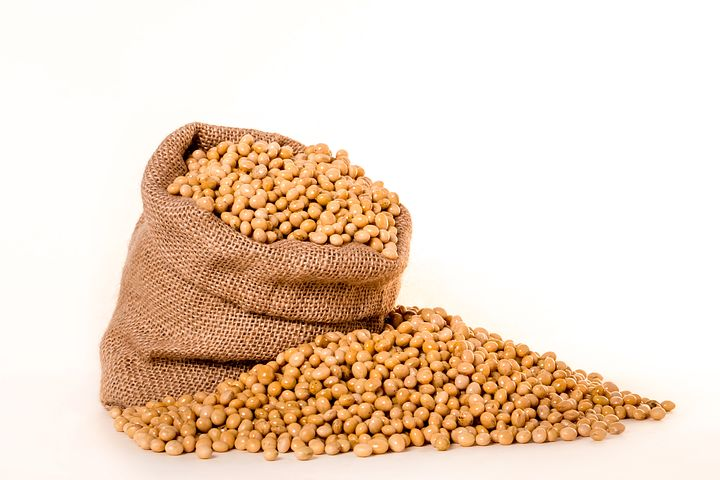 soybeans-2039642__480-1