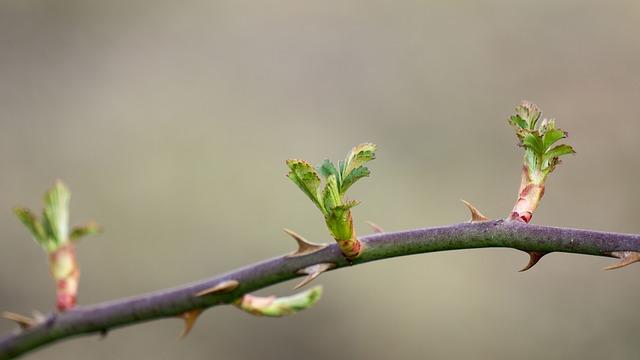 spring-1281183_640