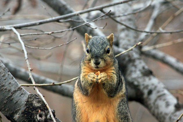 squirrel 241521 960 720