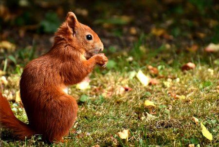 squirrel-2824272_640