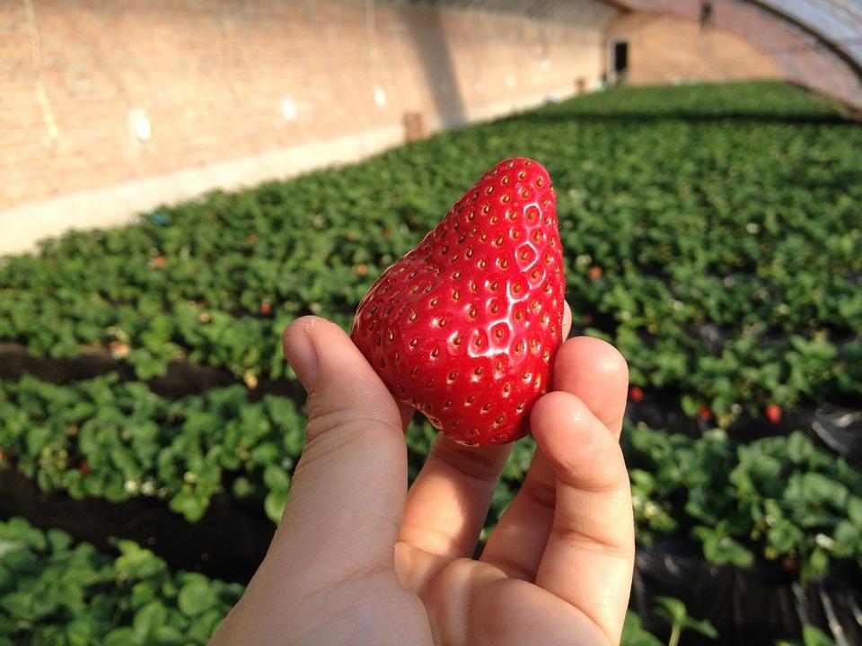 strawberry-625711_960_720