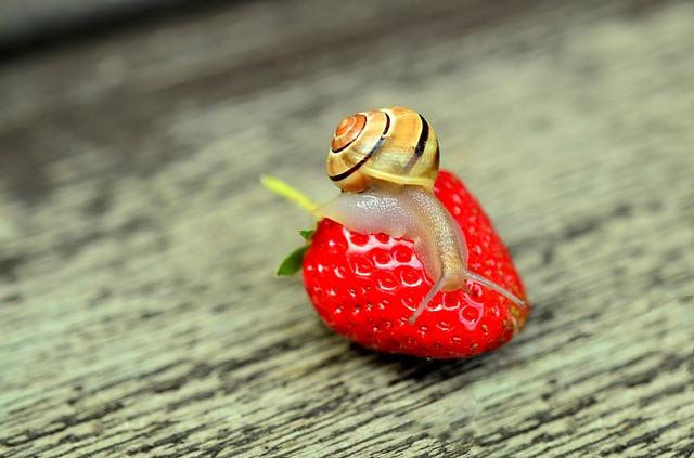 strawberry-799597_640