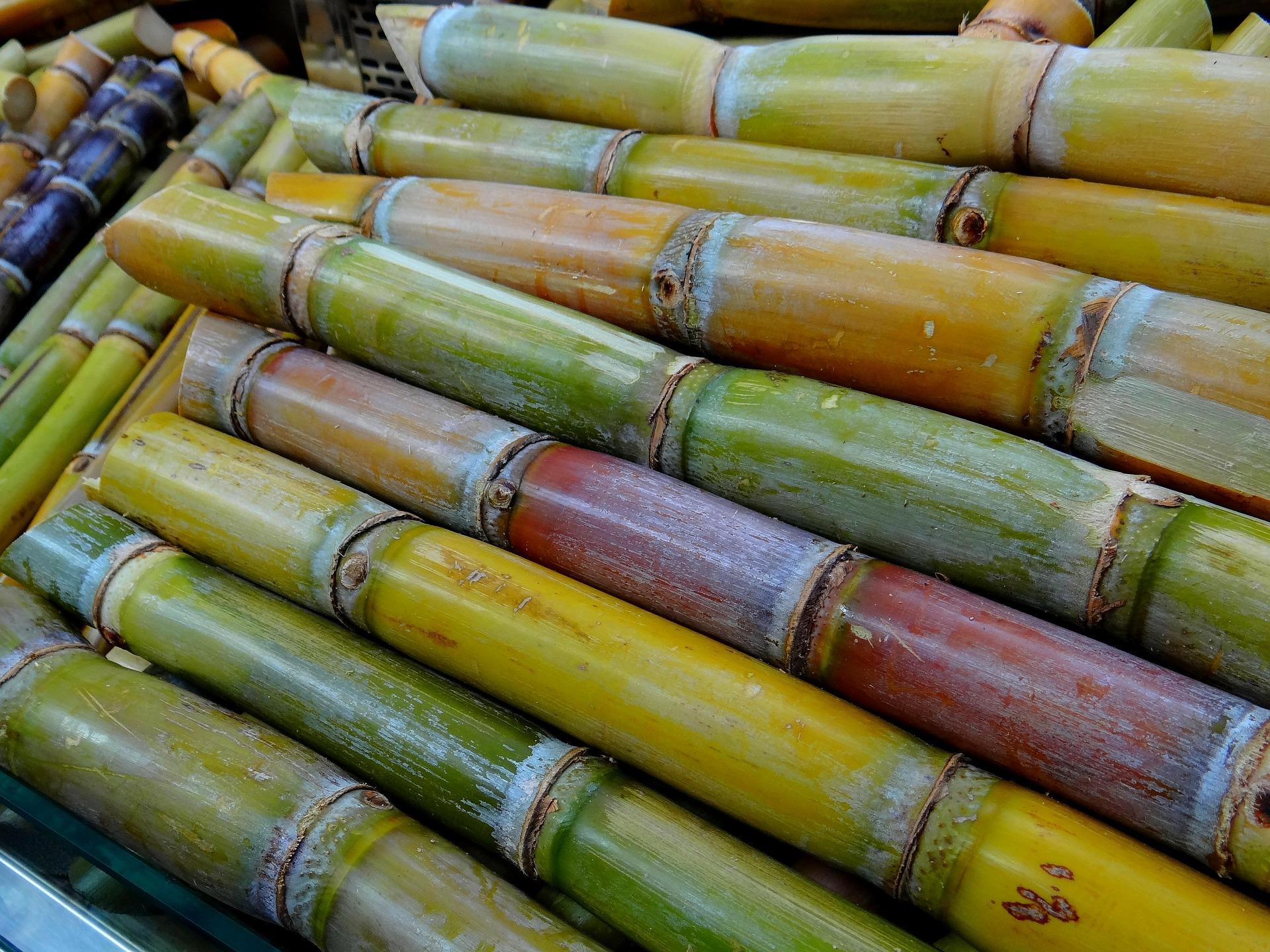 sugar cane 276242 1920