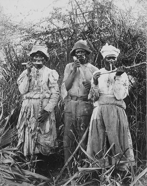 sugar-cane-harvest-62895_640
