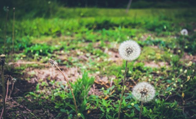 sustainability-2014191_640