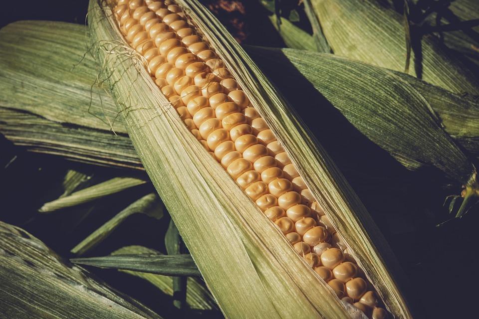 sweet corn 3705687 960 720