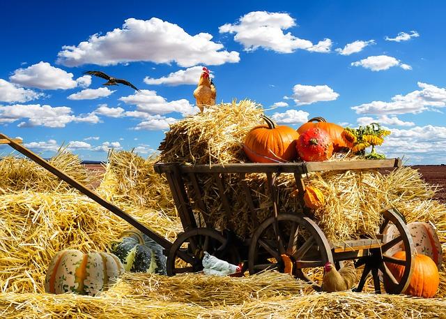 thanksgiving-1674774_640