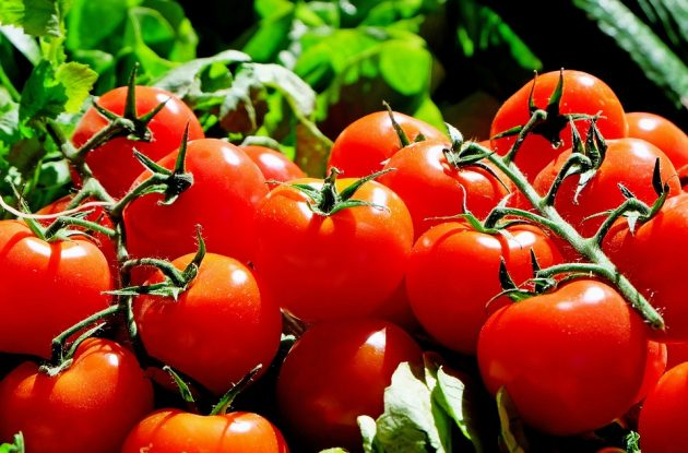 tomatoes 1280859 960 720