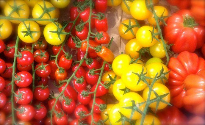 tomatoes 335468 960 720