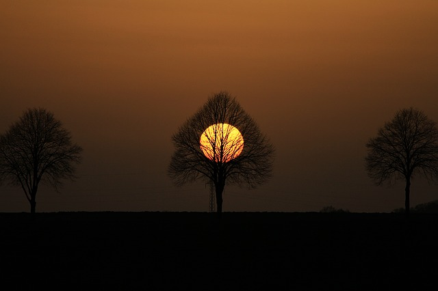 tree-1347873_640