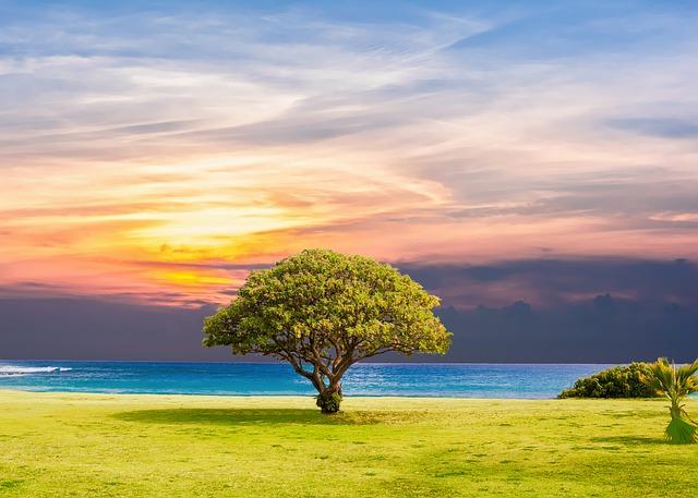 tree-2435269_640
