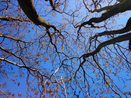 tree-439171_640