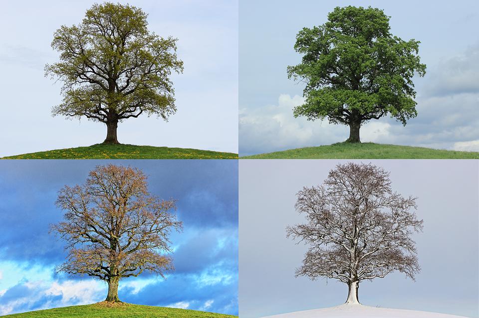 tree 776932 960 720