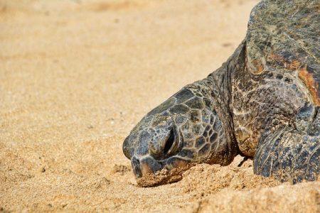 turtle-3127236_640