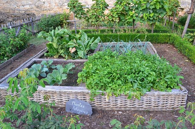 vegetable garden 890625 640