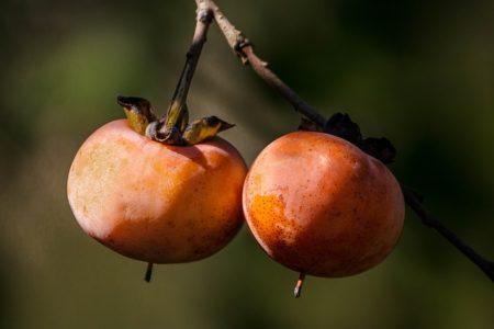 wild-persimmon-1727097_640