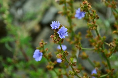 wildflowers-907281_640