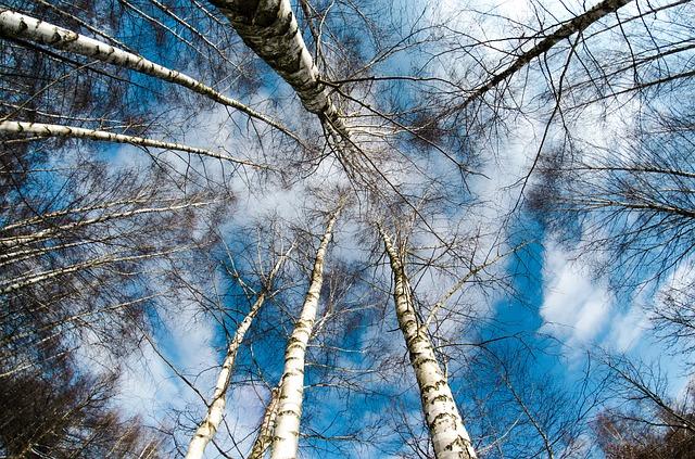 winter-260838_640