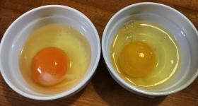 市販の卵の驚きの実態!日本の卵は遺伝子組み換え飼料・人工着色・狭いケージ飼いでオーガニックとはかけ離れたものだった!