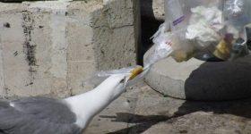ついに中国が日本からのプラスチックゴミの輸入を制限へ!プラスチックゴミを自国で処理せざるを得なくなる私たちは・・・