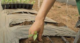 「作る人」がいない日本の農業に未来はない?オーガニック農家を、なりたい職業ベスト10に入れよう!「農家を憧れの職業にしよう活動」始めました。