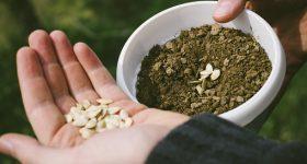 種子法、農薬問題…それでもあなたは「安さ」で選びますか?|オーガニック食品は高価ではないその理由