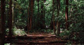 都会のジャングルで消耗しているあなたへ|森は健康の貯蔵庫。心身のリハビリや疾病予防に効果大の森林療法で森から元気をもらう方法とは?