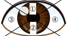 目からわかる健康状態|目の中の血管や点の意味を「マクロビオティック望診法」で読み解く!