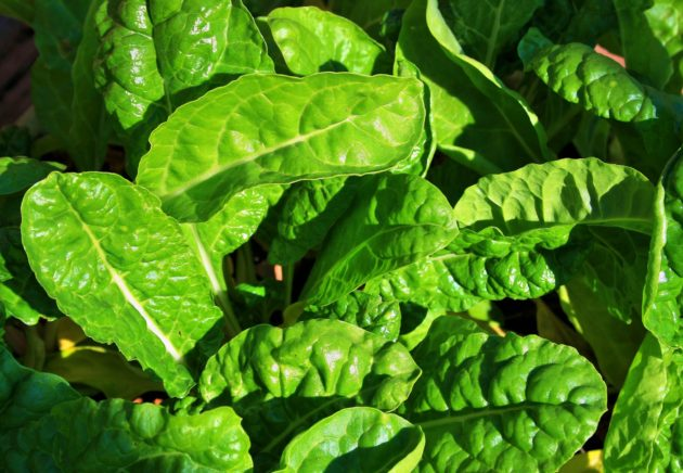 young-spinach