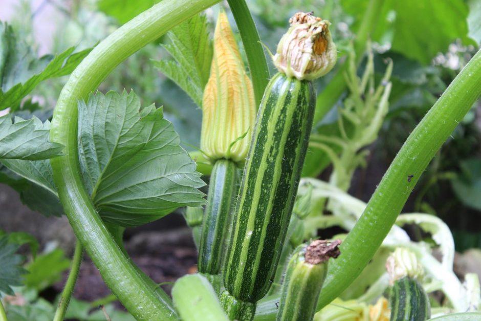 zucchini-3481078_960_720